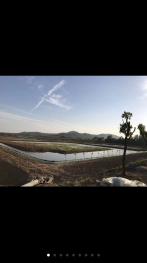 合肥肥东县 1100亩 农场 转让