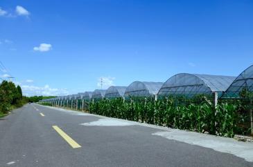 集士港湖泊河80亩设施完善生态农庄庄园农场寻求有实力的合作伙伴!