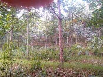 海南儋州390.6亩农场转让
