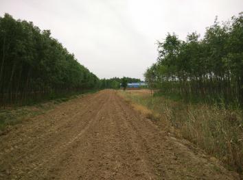 济南历城区10亩水浇地出租(SY001)