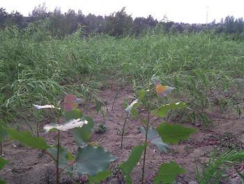 (414)青岛黄岛区 200亩 水浇地 出租