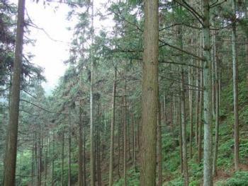 抚州南城县20亩有林地转包