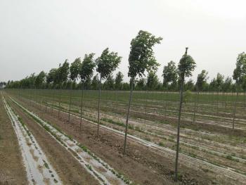 天津静海区800亩水浇地出租