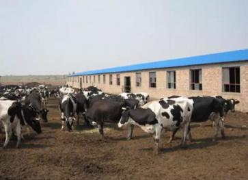 内蒙古包头4.5亩养殖用地转让