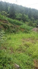 重庆武隆县 80亩 旱地 转让