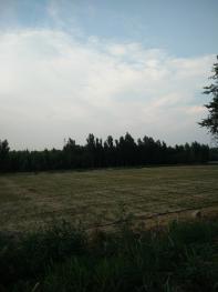 1408石家庄  深泽 500亩 沙地 出租