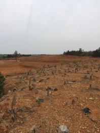 江西南昌 150亩山地带厂房 合作,出租或转让