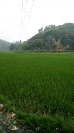 贵阳清镇市1200亩水田出租