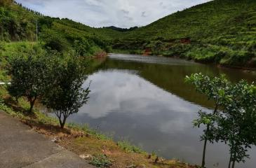 河源东源县50亩农场急转让