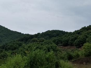 绍兴上虞区 62亩 有林地 转让