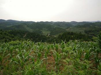 贵阳息烽县 2106亩 旱地 合作
