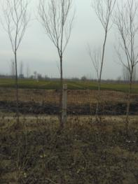 济南天桥区 46亩 农场 出租