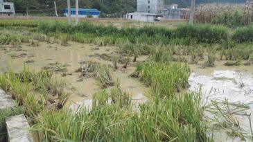 河池都安瑶族自治县 0.4亩 水田 转让