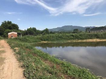 广东佛山高明区15亩水产养殖用地出租