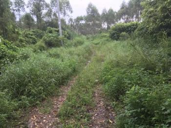 广东佛山高明区15亩旱地出租