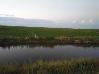 吉林白城大安市300亩水田转让