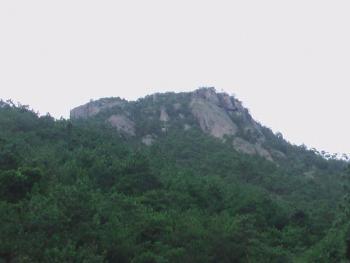 新乡辉县市 16500亩 有林地 合作