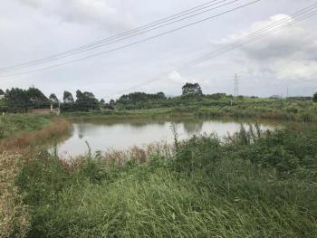 广东佛山高明区50亩水产养殖用地出租