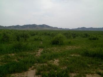 赤峰巴林左旗 320亩 其它林地 转让