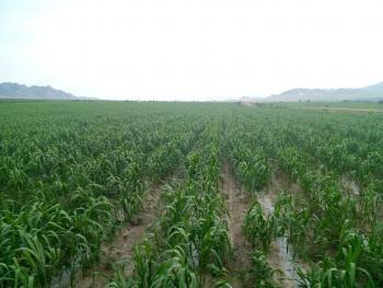 赤峰巴林左旗 270亩 水浇地 出租