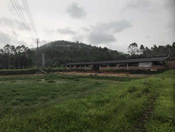 广东佛山高明区20亩畜牧养殖用地出租