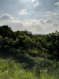 马鞍山含山县411亩有林地转让