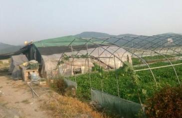 宁波鄞州区 17亩 菜园 转包