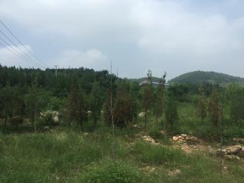 济南历城区 120亩 农场