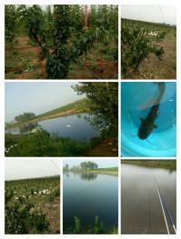 南阳邓州市58亩有林地转让