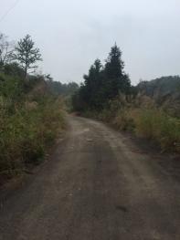泉州南安市 1000亩 林地 出租
