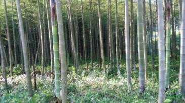福建龙岩 2000亩 有林地 合作