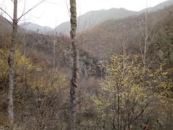 南阳内乡县 4000亩 有林地 转让