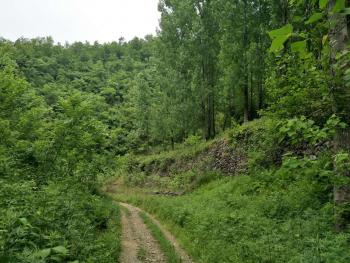 南阳内乡县林权证面积 1500亩 灌木林地 出租