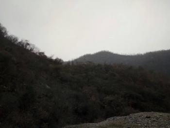 南阳内乡县 2700亩 有林地 转让
