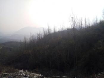 南阳内乡县 2000亩 有林地 转让