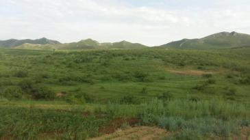赤峰巴林左旗 5000亩 灌木林地 转让