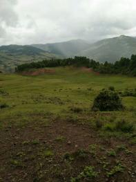 怒江兰坪白族普米族自治县 20000亩 天然牧草地 出租