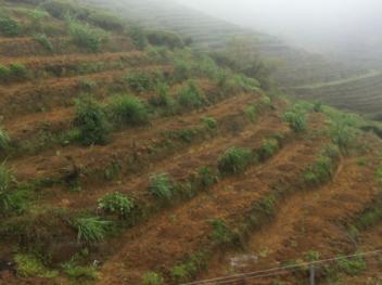 漳州南靖县 800亩 有林地 转让