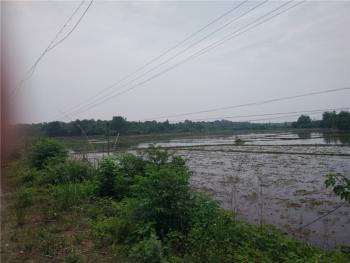 黄冈黄州区 200亩 水田 出租