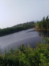 秦皇岛海港区70亩有林地出租