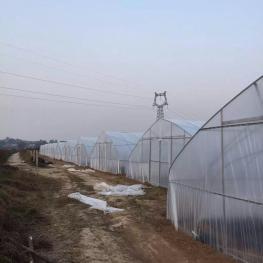 宝鸡眉县 141亩 菜园 出租