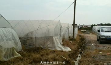 合肥肥东县130亩菜园出租