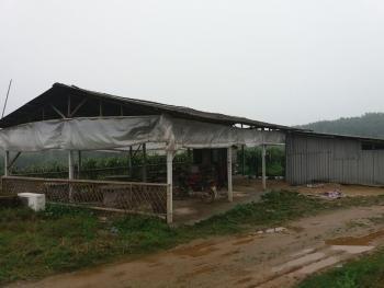 肇庆四会市 86亩 休闲果园农场 转让