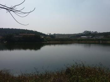 肇庆四会市 200亩 鱼塘综合养殖农场 转让