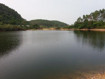 江门恩平市 500亩 鱼塘果园综合农场 出租