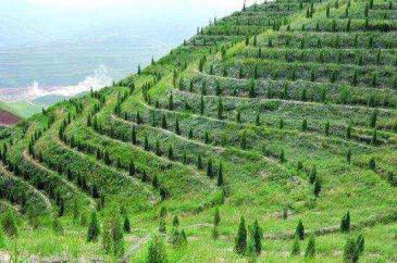 白山临江市256亩林地-有林地转让