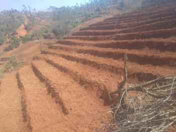 红河建水县36亩其它耕地出租