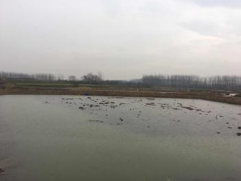 南京浦口区30亩养殖用地-水产养殖用地出租