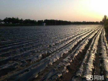 渭南华县3亩水浇地转让