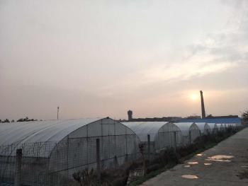 嘉兴桐乡市100亩园地-菜园转让